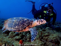 &quot;My dive buddy&quot; The turtle not the diver.. Literally this... by Carlos P&#233;rez 
